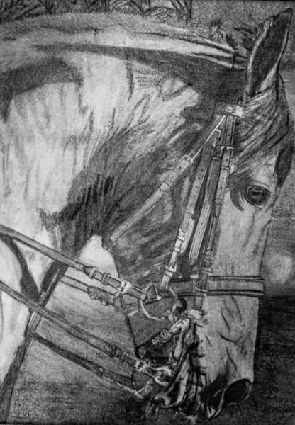 Friesian Drawing - Proud At Work by Laurietta Oakleaf
