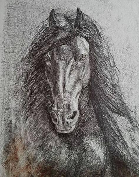 Friesian Drawing - Proud Friesian by Chantal De Keersmaecker