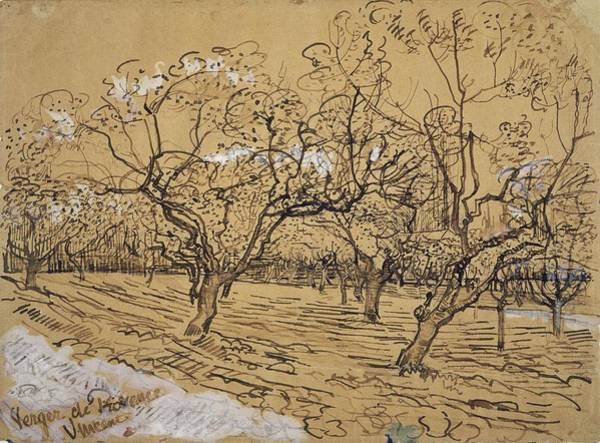 Painting - Provencal Orchard Arles  March - April 1888 Vincent Van Gogh 1853  1890 by Artistic Panda