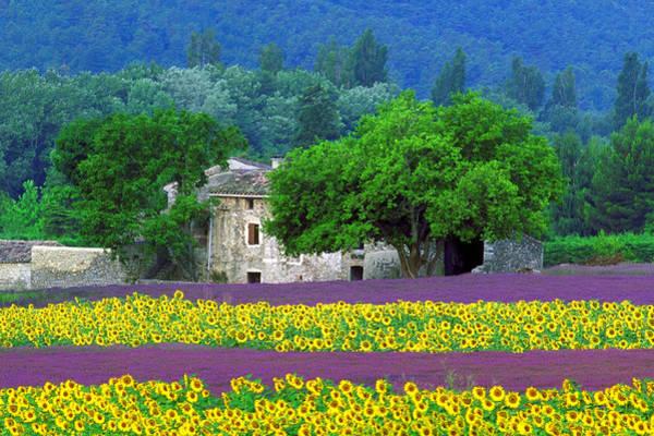 Wall Art - Photograph - Provence by John Galbo