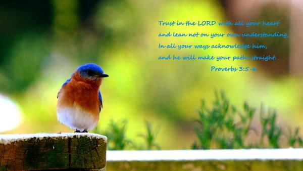 Photograph - Proverbs 3 5  6 Bluebird by Lisa Wooten