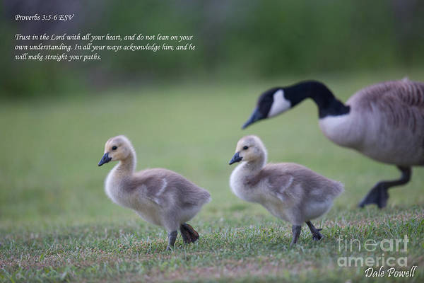 Photograph - Proverbs 3 by Dale Powell