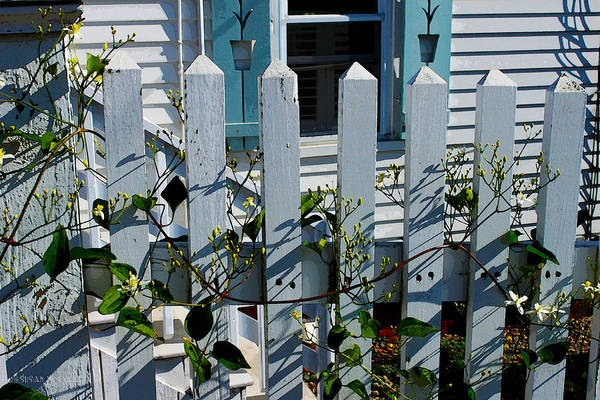 Photograph - Provincetown Fence #1 by Susan Vineyard