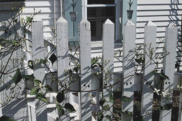 Photograph - Provincetown Fence  #2 by Susan Vineyard