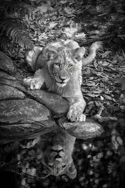 Photograph - Prowler Reflection by Ghostwinds Photography