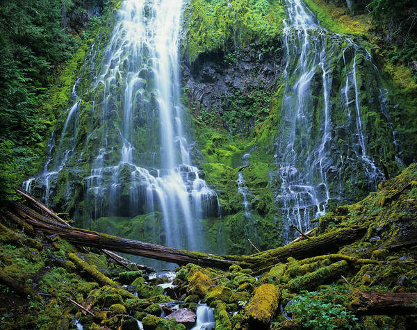 Photograph - Proxy Falls Flow by Robert Potts