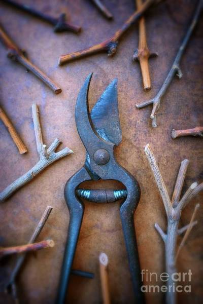 Wall Art - Photograph - Pruning Scissors by Carlos Caetano