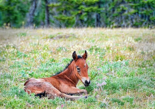 Photograph - Pryor Mountaina Foal by Gary Beeler