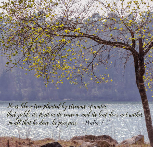 Photograph - Psalm 1  3  by Andrea Anderegg