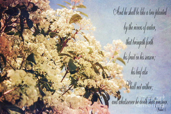 Photograph - Psalm 1 Verse 3 by Mechala Matthews