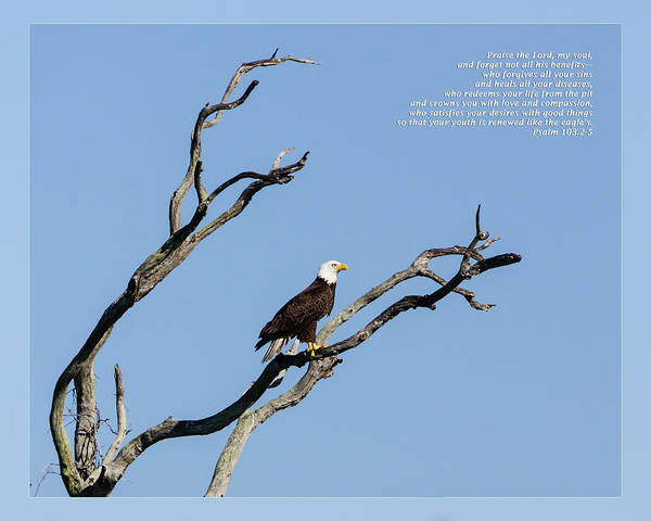 Photograph - Psalm 103 2-5 by Dawn Currie
