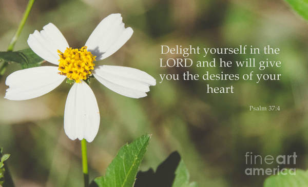 Photograph - Psalm 37 4 by Andrea Anderegg