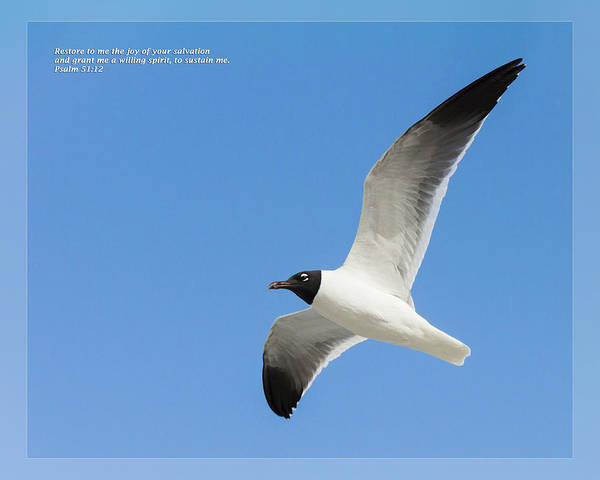 Photograph - Psalm 51 12 by Dawn Currie