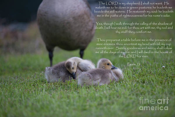 Photograph - Psalm Of David by Dale Powell