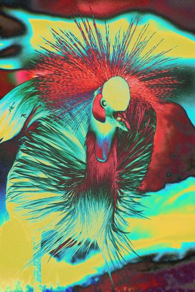 Photograph - Psychedelic Crested Egret by Richard Henne