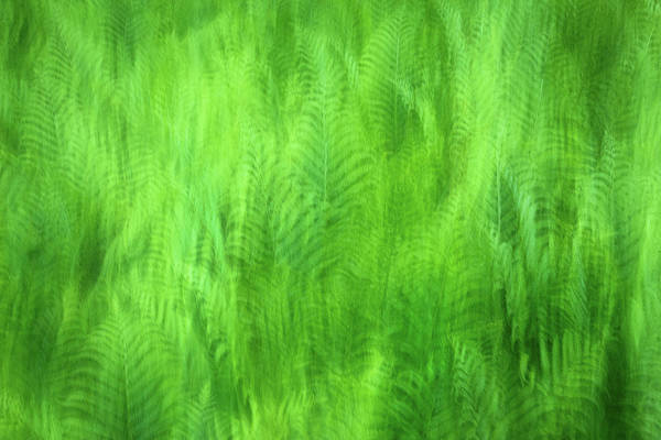 Photograph - Psychedelic Ferns by John Vose