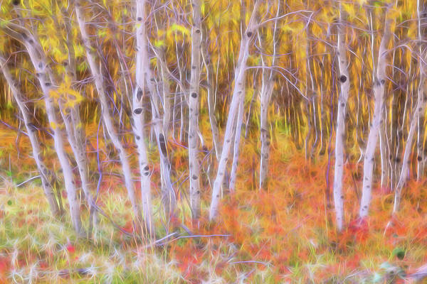 Photograph - Psychedelic Forest by James BO Insogna
