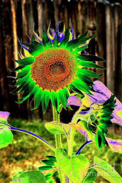 Wall Art - Photograph - Psychedelic Sunflower by Paul W Faust - Impressions of Light