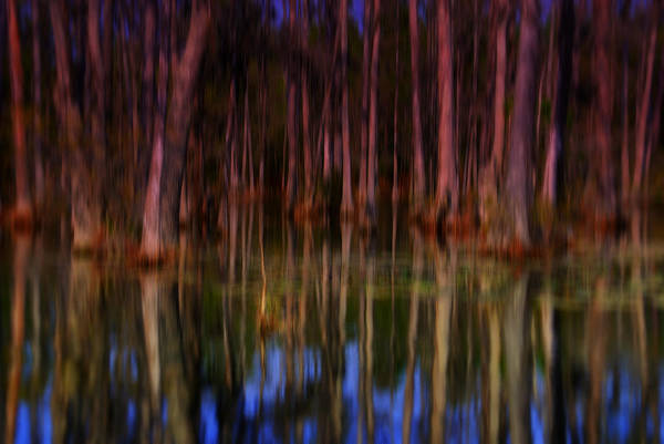 Artful Photograph - Psychedelic Swamp Trees by Susanne Van Hulst