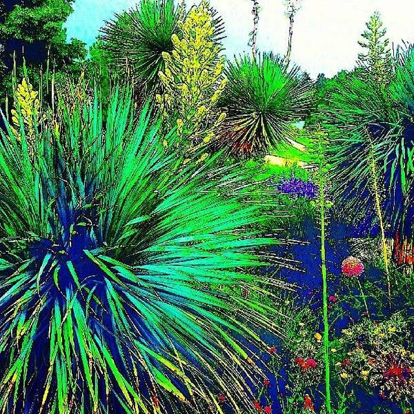 Surrealism Wall Art - Photograph - Psychedelic Yuccas. #plant #yucca by Austin Tuxedo Cat