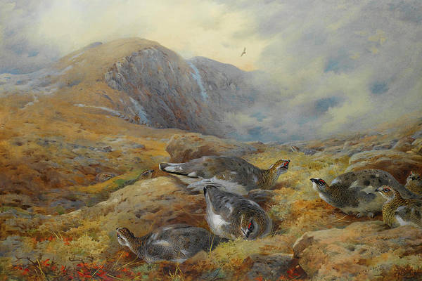 Mixed Media - Ptarmigan Danger Aloft By Thorburn by Archibald Thorburn