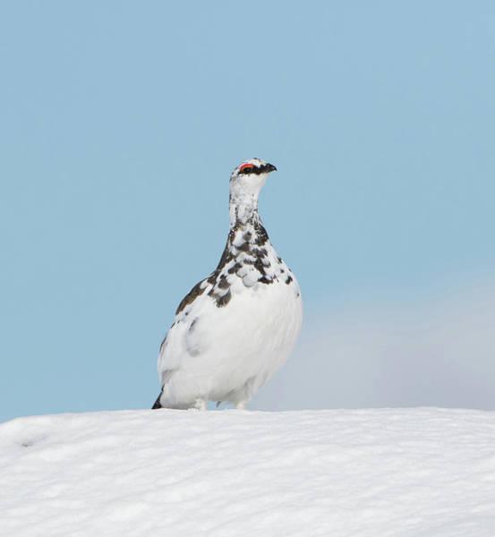 Photograph - Ptarmigan On Top by Peter Walkden