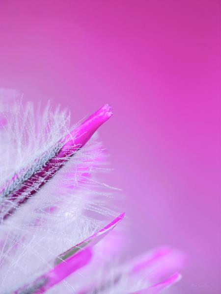 Fuzzy Photograph - Ptilotus Macro by Wim Lanclus
