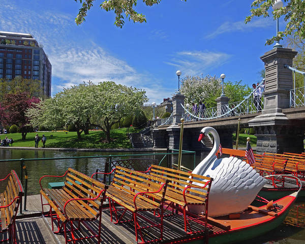 Public Garden Swan Boat In The Spring Boston Ma Art Print