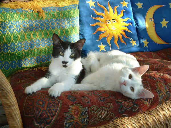 Wall Art - Photograph - Puddy Tats Relax by Gerard Fritz