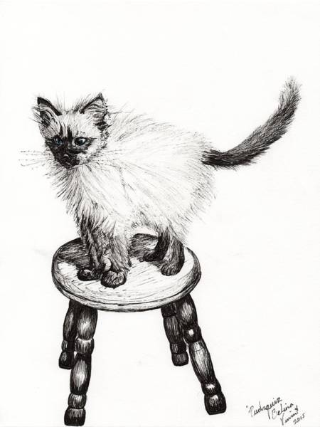 Pussycat Drawing - Pudsquiz Belina by Vincent Alexander Booth
