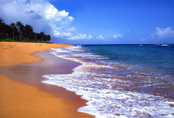Photograph - Puerto Rico Shoreline Along Pinones by Thomas R Fletcher