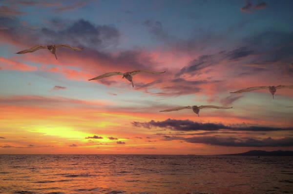 Photograph - Puerto Vallarta Pelicans by Windy Osborn