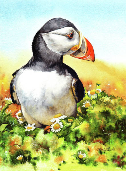 Painting - Puffin by Peter Williams
