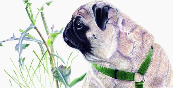 Painting - Pug And Nature by Patricia Barmatz
