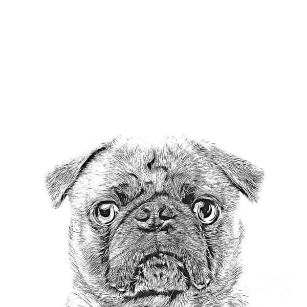 Wall Art - Digital Art - Pug Dog Sketch by Edward Fielding