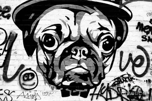 Photograph - Pug Life Berlin by John Rizzuto