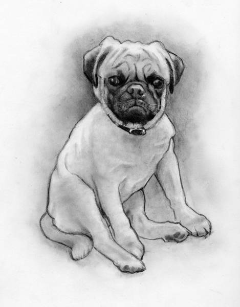 Wall Art - Drawing - Pug Puppy In Pencil by Joyce Geleynse