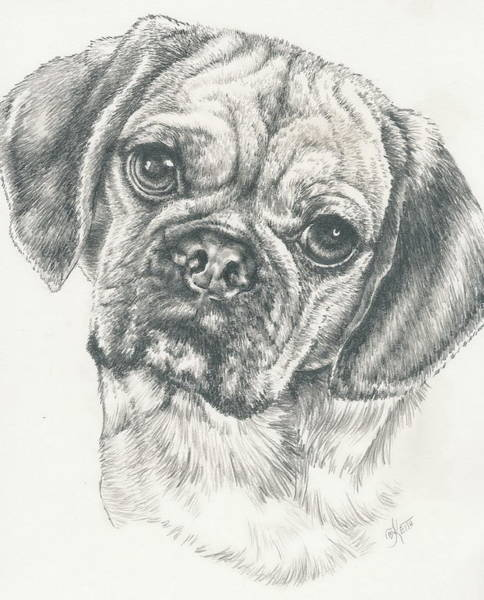 Mutt Drawing - Bug by Barbara Keith