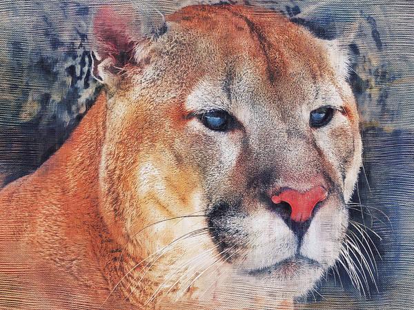 Puma Digital Art - Puma Cat by Yury Malkov