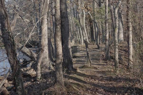 Photograph - Pumpkin Ash Trail by Buddy Scott