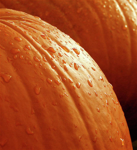 Pumpkins Wall Art - Photograph - Pumpkin Dew by Greg Joens