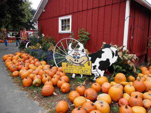 Photograph - Pumpkin Farm by Deborah Kunesh
