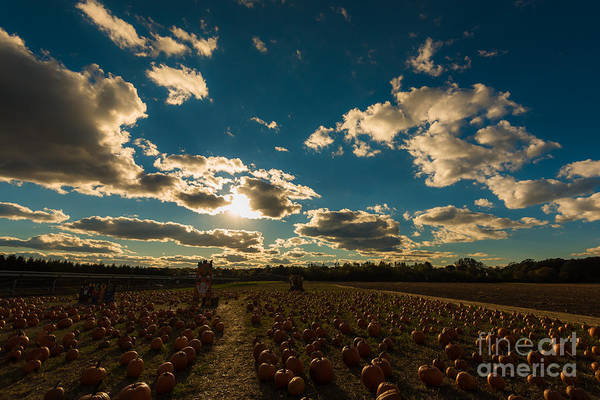 Photograph - Pumpkin Farm Sunset by Alissa Beth Photography