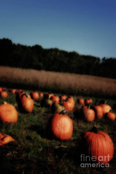 Photograph - Pumpkin Field Shadows by Karen Adams