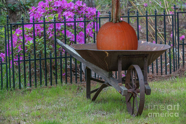 Photograph - Pumpkin Harvest by Dale Powell