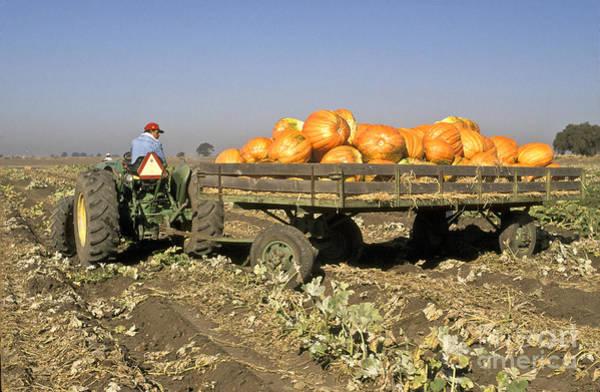Mac Photograph - Pumpkin Harvest by Inga Spence