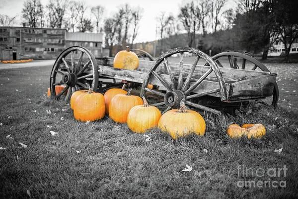 Wall Art - Photograph - Pumpkin Harvest Stowe Vermont by Edward Fielding