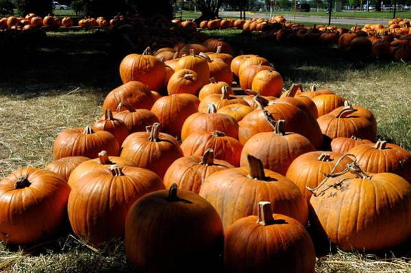 Photograph - Pumpkin Lines by Teresa Blanton