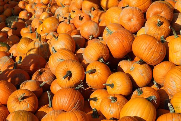 Photograph - Pumpkin Patch At North Arm Farm Pemberton by Pierre Leclerc Photography