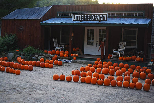 Photograph - Pumpkin Patch Little Field Farm New Hampshire 2 by Toby McGuire